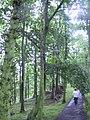 West Yorkshire Sculpture Park (3807435718).jpg