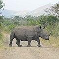 White Rhinoceros (2874383655).jpg