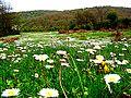 Wildflowers in the High Meadow (3548642412).jpg