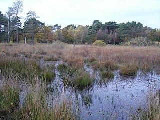 Sandhurst to Owlsmoor Bogs and Heaths