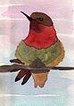 Wine-throated-hummingbird.jpg