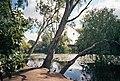 Wollundry Lagoon 2003.jpg