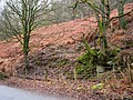 Wooded slopes - geograph.org.uk - 135584.jpg
