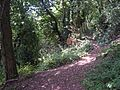 Woodland Paths - geograph.org.uk - 326383.jpg