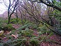 Woodland on Tod Moor - geograph.org.uk - 285215.jpg