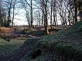 Woods (2274736642).jpg