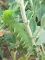 Worm on plant.jpg