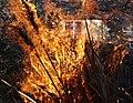 Wraxall 2013 MMB 87 Bonfire.jpg