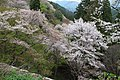 Yoshinoyama (7134434435).jpg