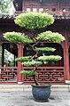 Yu Gardens 20090724-15.JPG