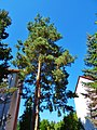Zehistaer Straße, Pirna 123361908.jpg