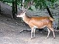 Zoo-Dortmund-IMG 5460-a.jpg