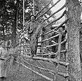"""""""Kozuc"""" (kozolec) (ima ostrvi, štange (pokončne) in late). Spredaj je """"laz"""", na njem stoji in """"obeša"""" snop na late. Konavec Anton, Svino 1951.jpg"""