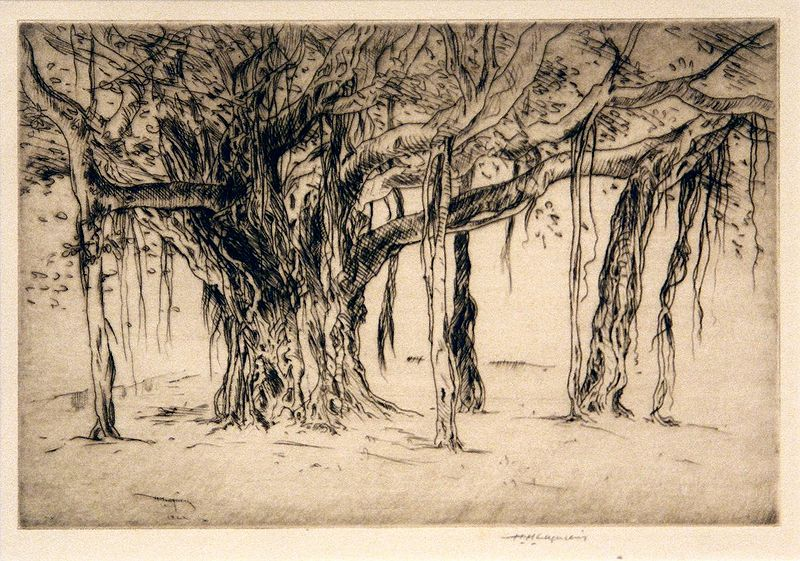 File:'Banyan - Study', etching by --Huc-Mazelet Luquiens--, 1922, --Hawaii State Art Museum--.JPG