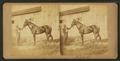 (Horse hamed) Belmont, by James Mullen.png