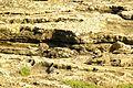 ® M.D. EL CAMPELLO ILLETA dels BANYETS CANTERA - panoramio (6).jpg