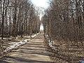 Аллея между Йошкар-Олой и Медведево.jpg