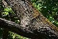 Андріївський ліс 15.jpg
