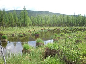 Baikal-Lena Nature Reserve - Swamp in Baikal-Lena