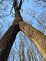 """Ботанический памятник природы местного значения - """"Большой Лес"""" -.JPG"""