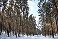 "Бывший парк ""Лебяжье"" - вид из леса - panoramio.jpg"
