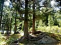 Горный Алтай - panoramio (1).jpg