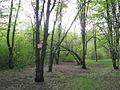 Дендрологічний парк 244.jpg