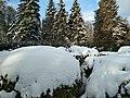 Дендропарк взимку.jpg