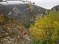 Есенни багри - с.Черепиш.jpg