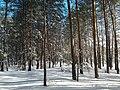 Зимова казка в Станиці-Луганській.jpg