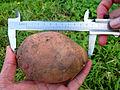 Измерение урожая картошки.jpg