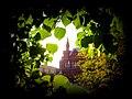 Исторический музей в липовых листьях.jpg