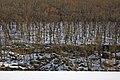 Камінь Коцюбинського та скелястий берег навколо нього P1340478.jpg