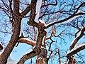 Кочубеївські Дуби у Регіональному ландшафтному парку «Диканський» 5.jpg