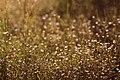 Макро фото рослин заплавних луків заказника3.jpg