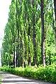 Наводницкий парк в Киеве. Фото 4.jpg