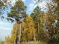 Осень в Шувакишском лесопарке.jpg