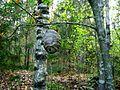 Осиное гнездо в лесу. Hornet's nest in the forest. - panoramio.jpg