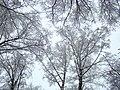 Ромашково, зима. Russian winter in Romashkovo - panoramio.jpg