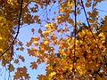 Різнобарв'я осені2.jpg