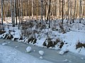 Удельный парк, конец зимы (Udelny park, end of winter) - panoramio.jpg