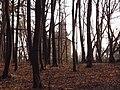 Украина, Киев - Голосеевский лес 258.JPG