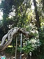 Уникальное дерево.jpg