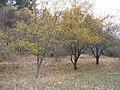 Արզականի և Մեղրաձորի արգելավայր-190.jpg