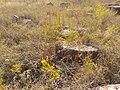 Իշխանավանքի գերեզմանոց 70.jpg