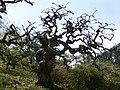 しだれ栗森林公園 - panoramio.jpg