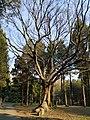 中山植物园(北园)景色05.jpg