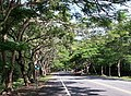 台九線鳳凰花道 Tree tunnel on Taiwan Highway 9 - panoramio.jpg