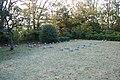 掘立柱建物址(ほったてばしらたてものし) - panoramio (1).jpg