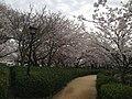 玖島城跡 - panoramio (1).jpg